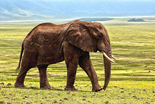 Parcourir la savane africaine le temps d'un séjour au Kenya